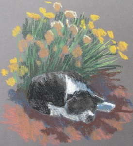 Sophy at Sulphur Creek